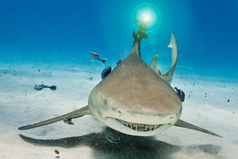 laser_shark